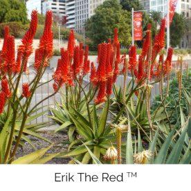 Erik the Red™