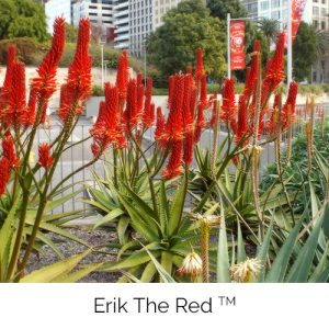 Erik the Red - The tall proud red