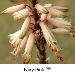 Fairy Pink - White with a sprinkle of fairy dust