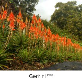 Gemini PBR