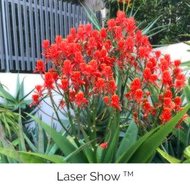 Laser Show™