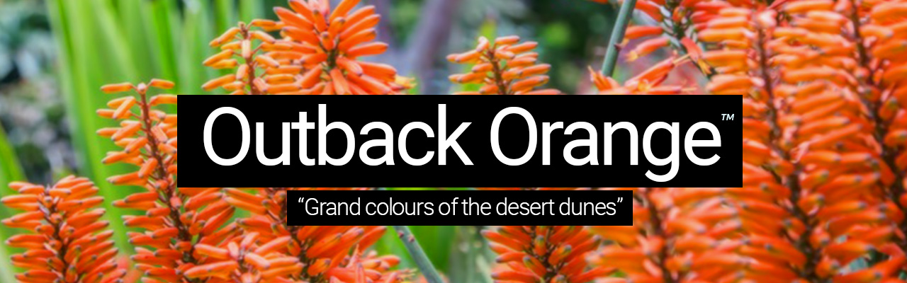 Outback Orange - Grand colours of the desert dunes