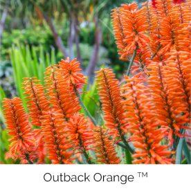 Outback Orange™