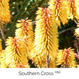 Southern Cross PBR