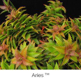 Aries™