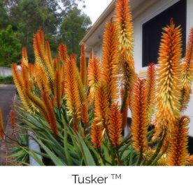 Tusker™