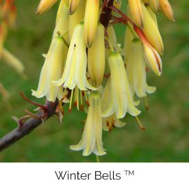 Winter Bells™