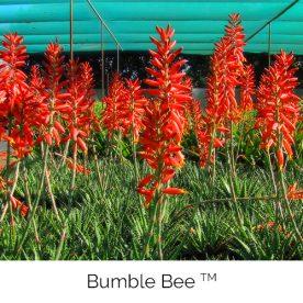 Bumble Bee™