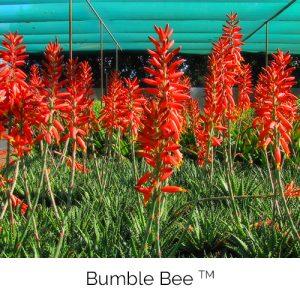 Bumble Bee - Bzz Bzz Bzz