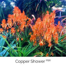 Copper Shower PBR