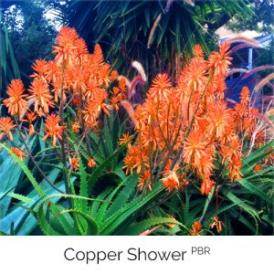 Copper Shower - Soft, malleable bronzy orange
