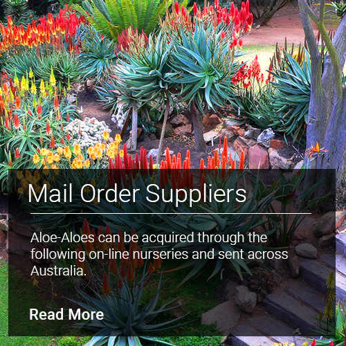Mail Order Suppliers - Aloe-Aloes can be acquired through the following online nurseries and sent across Australia